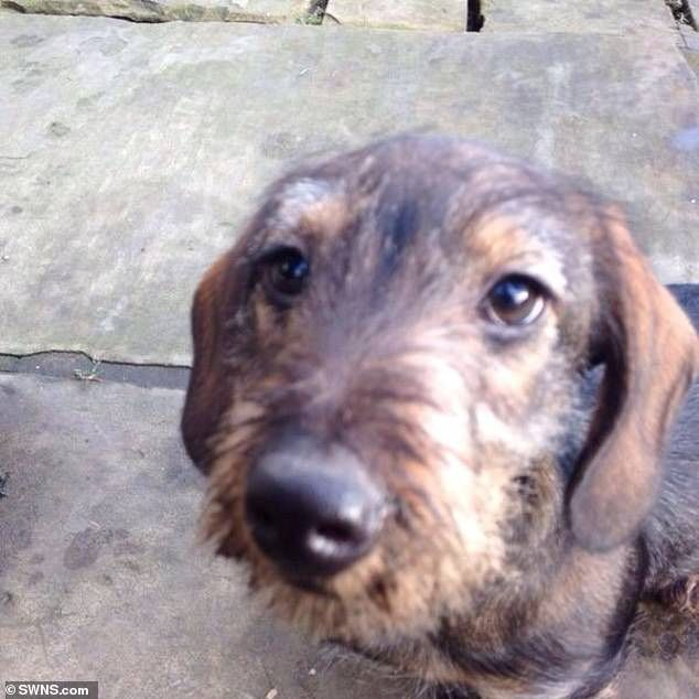 Dachshund Escapes Rabbit Hole Five Days After Disappearing From