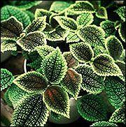 Nice Indoor Plants Low Light | G6515 Lighting Indoor Plants | University Of  Missouri Extension