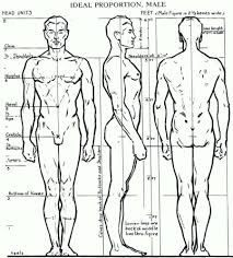 Human body profile
