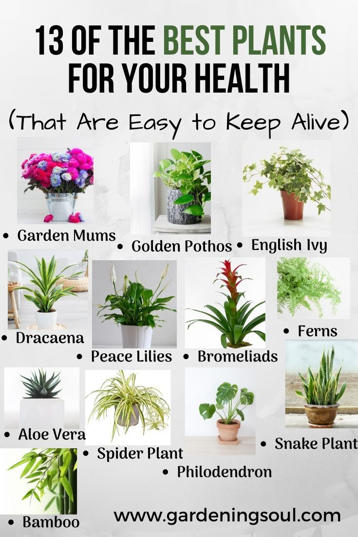 13 Of The Best Plants For Your Health