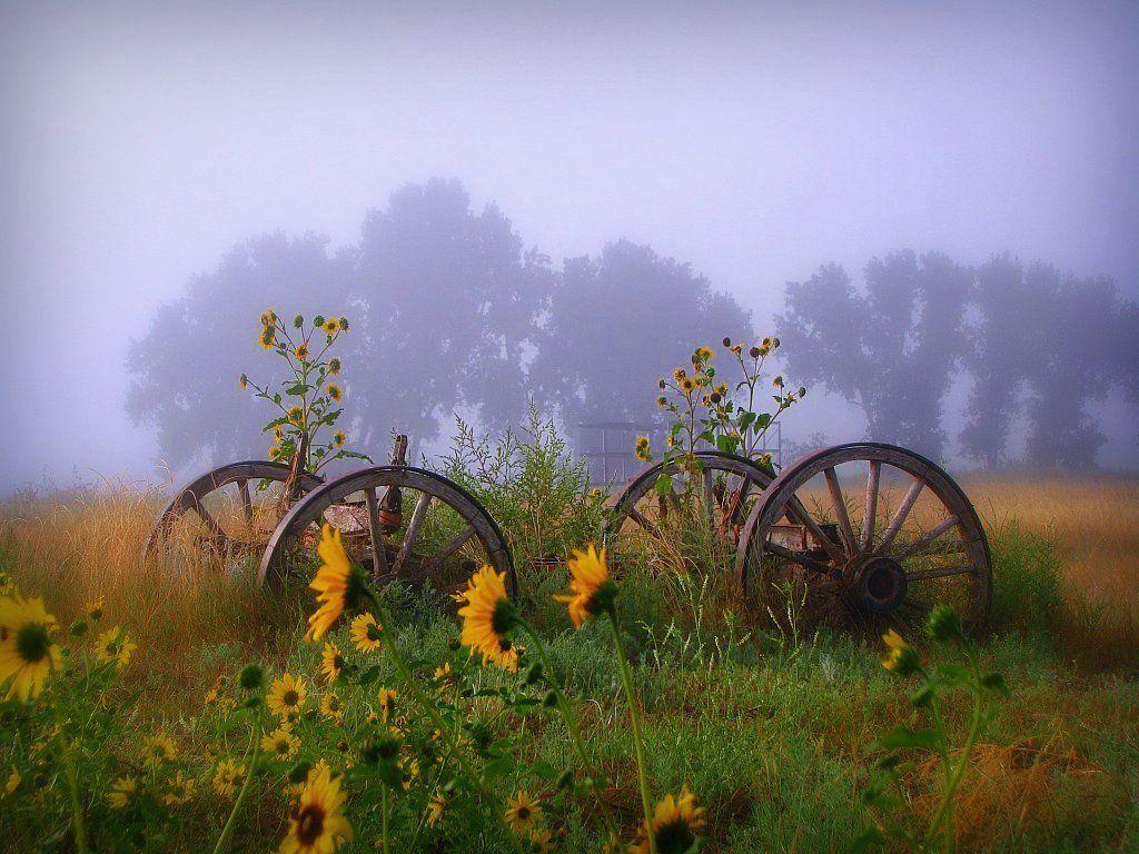 открытки фото с добрым утром природа дифференцировочные признаки
