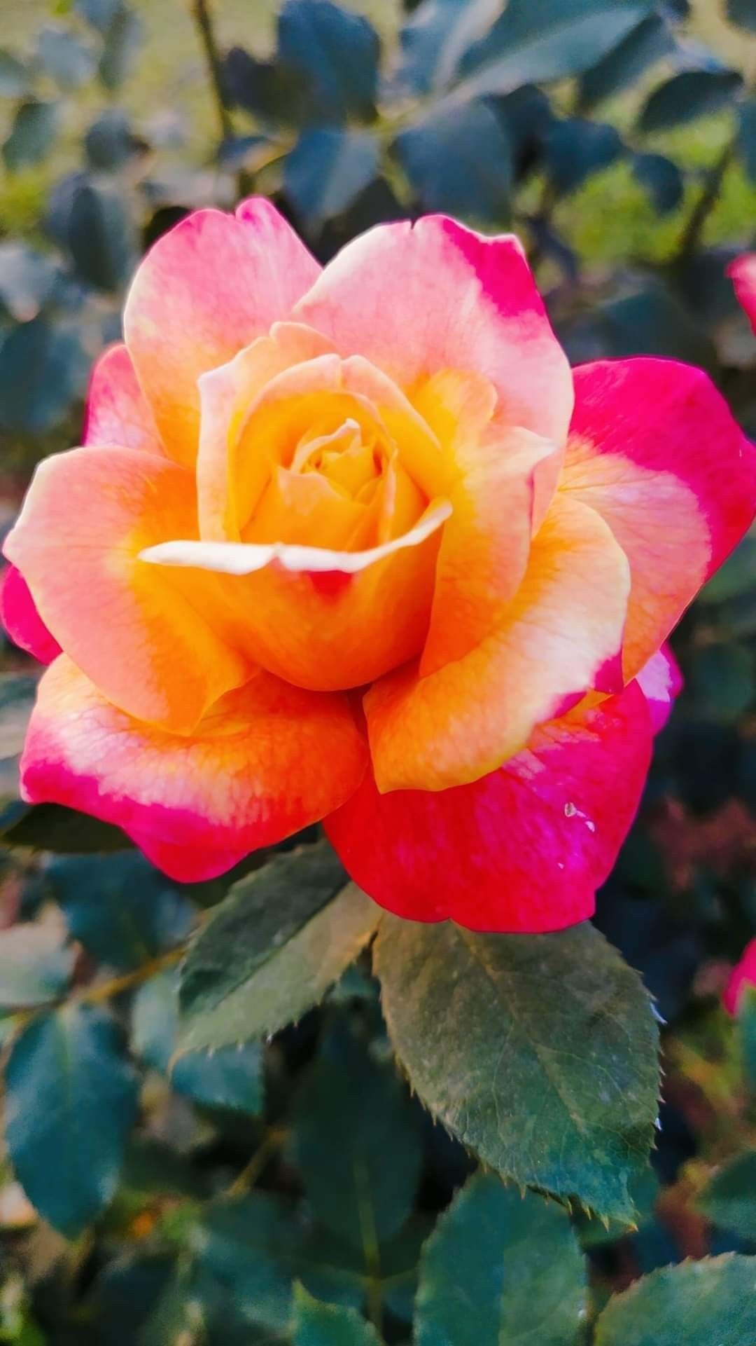 Pin By Sana Khan On 1 A File General Rare Flowers Beautiful Flowers Amazing Flowers