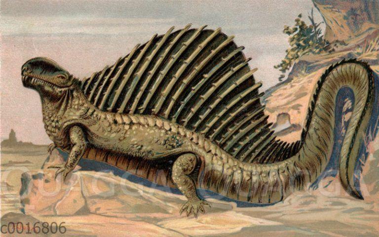 Dimetrodon incisisivus | Dinosaurierbilder, Posterdrucke ...