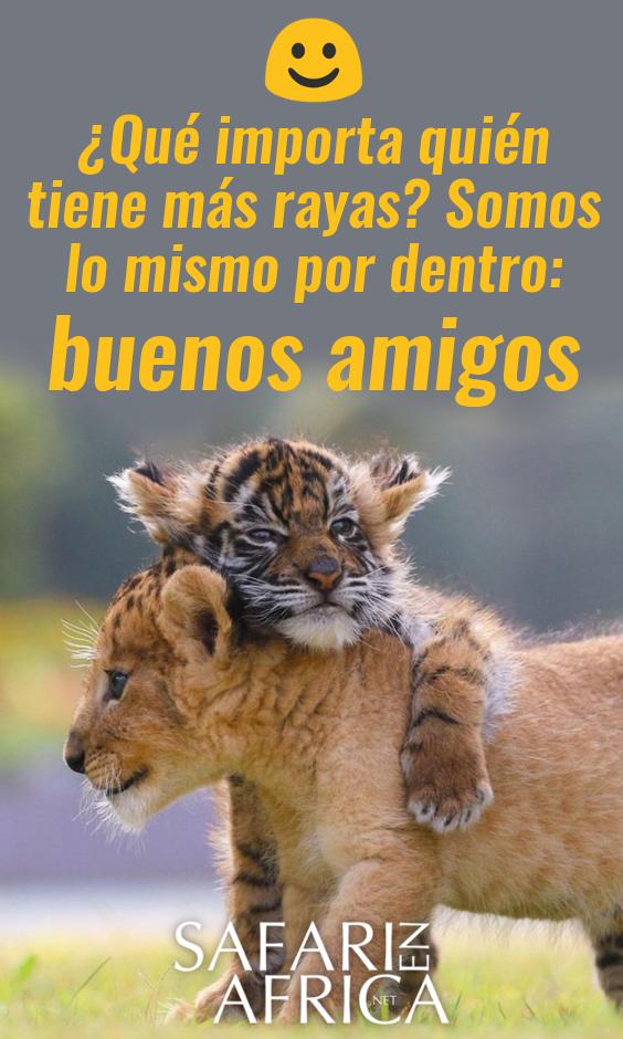 Sin Lugar A Dudas Una De Esas Imágenes Graciosas De Animales Que Te Ablandará El Corazón Animales Afr Cosas De Risa Imágenes Graciosas Animales
