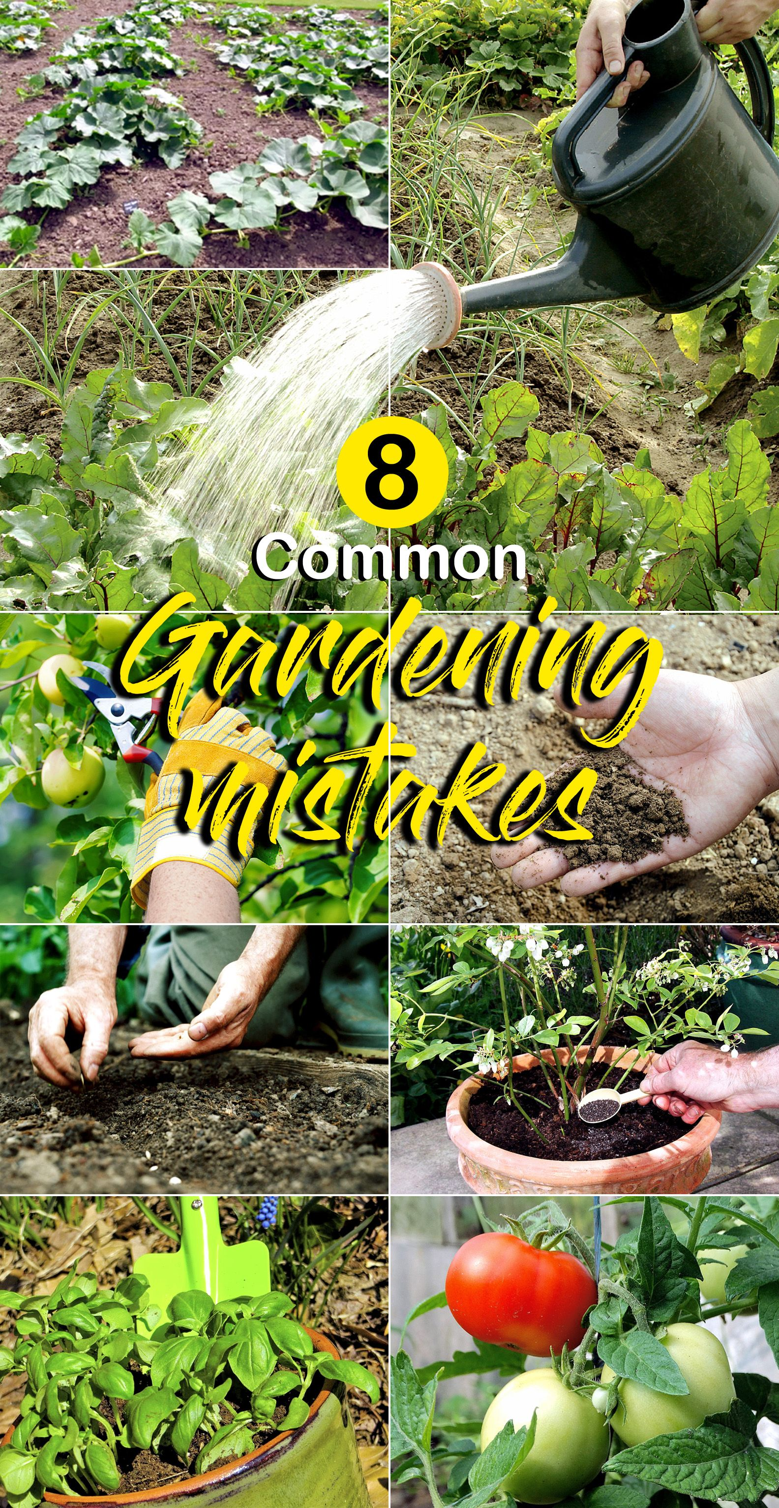 8 Common Gardening Mistakes That Can Be Easily Avoided 640 x 480