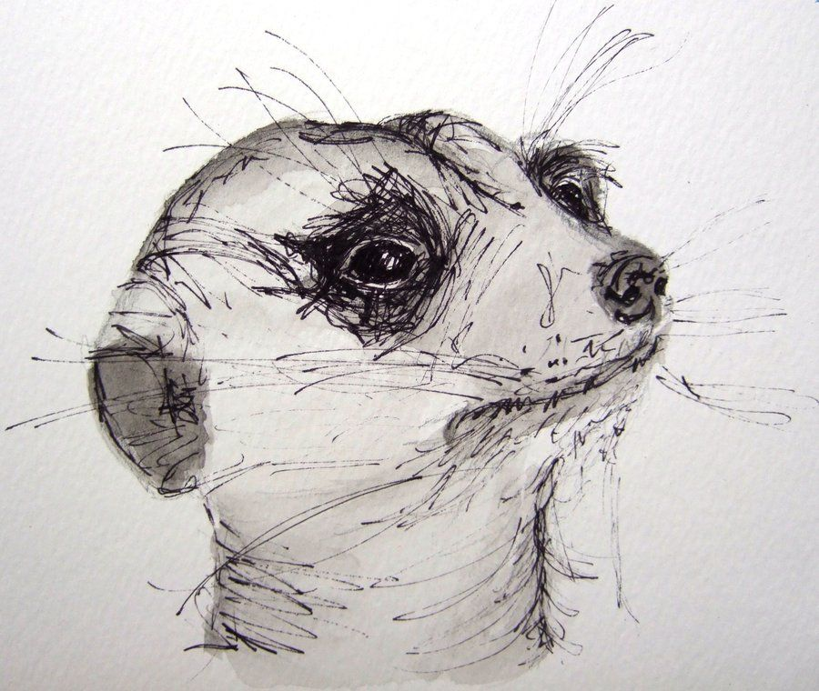 Realistic Drawing Meercat - Google Search