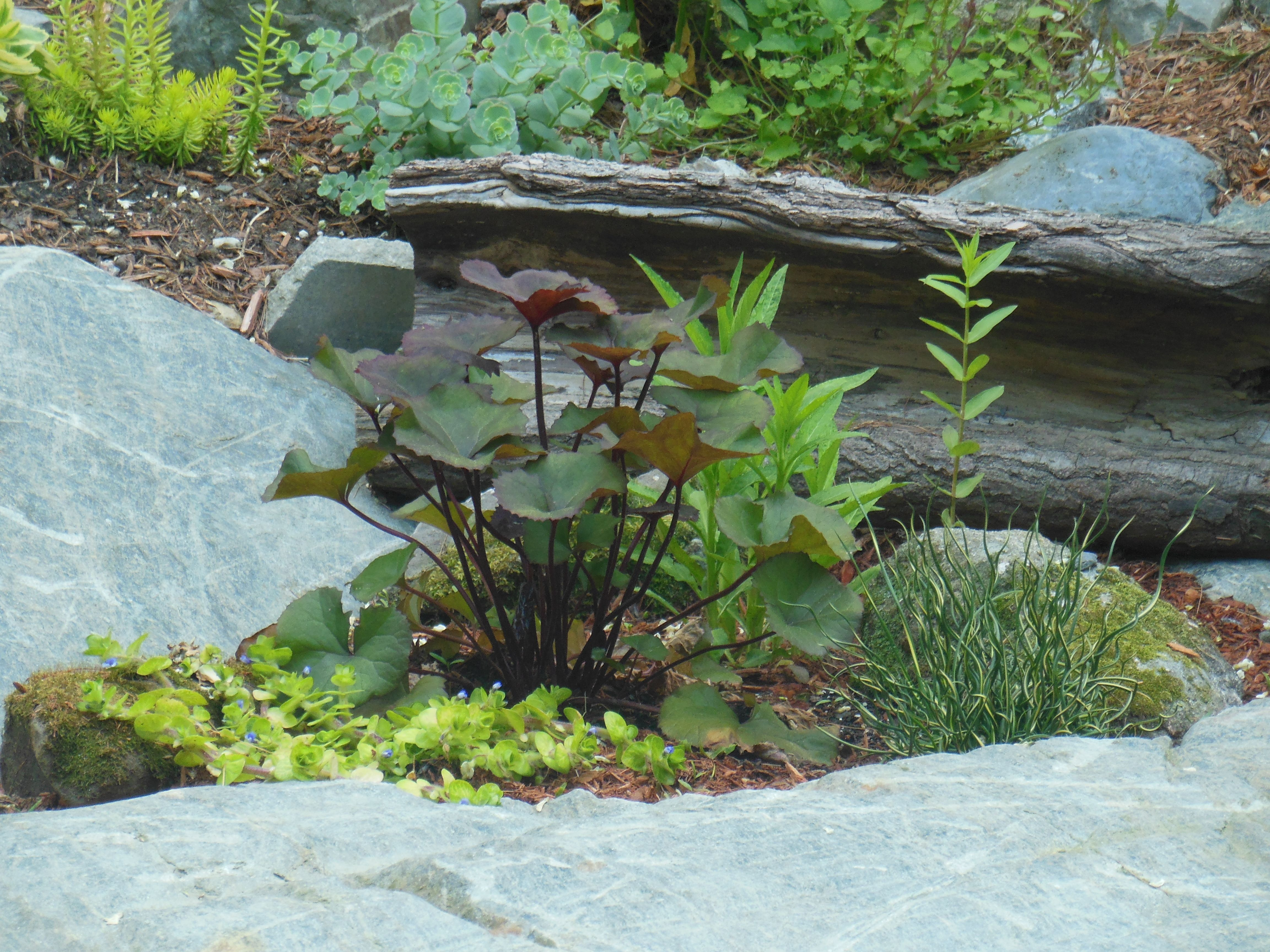 Bog Plants Beside Pond And Waterfall