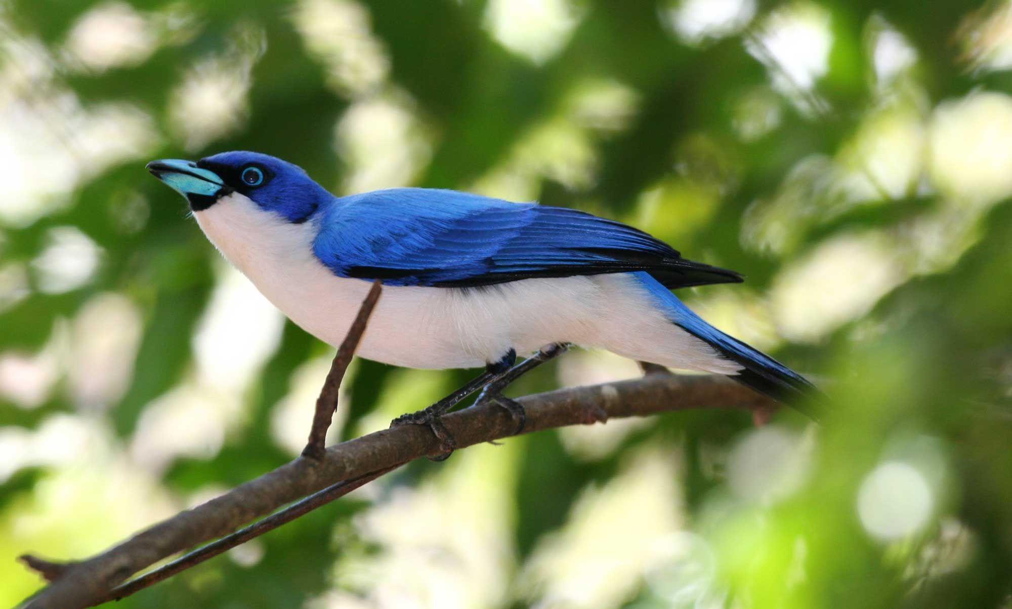 Птицы хакасии фото и названия рассказала, как