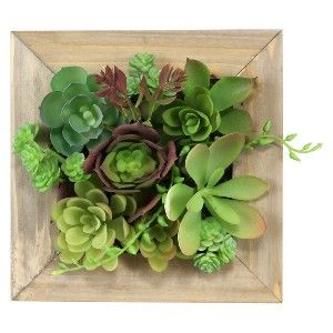 Threshold Mixed Succulent in Small Wooden Frame