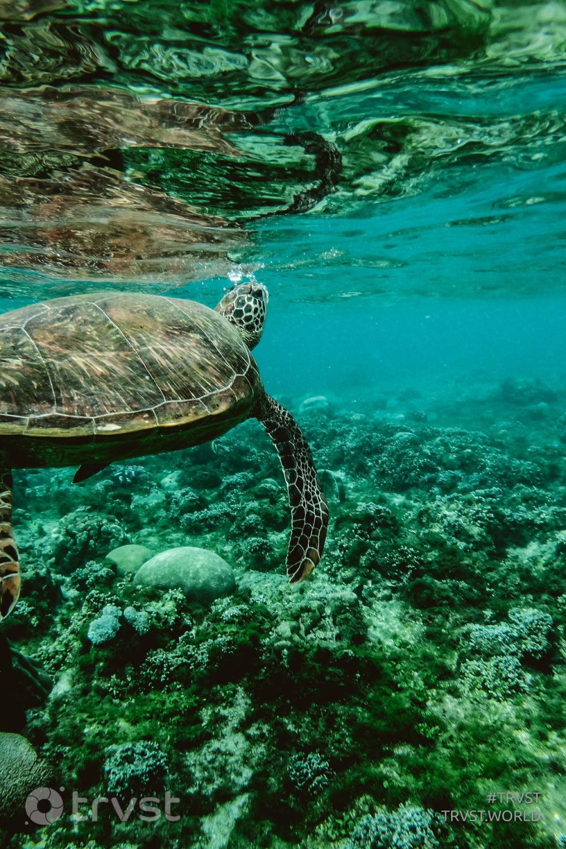 #trvst #intheocean #takeaction #perfectnature #thinkgreen #oceanconservation #dogood #marinelife #gogreen #turtles #dosomething   📷 @belle-co-99483 on pexels
