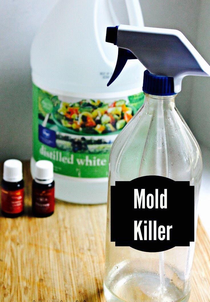 Kill Mold Naturally Diy mold remover, Diy molding, Mold