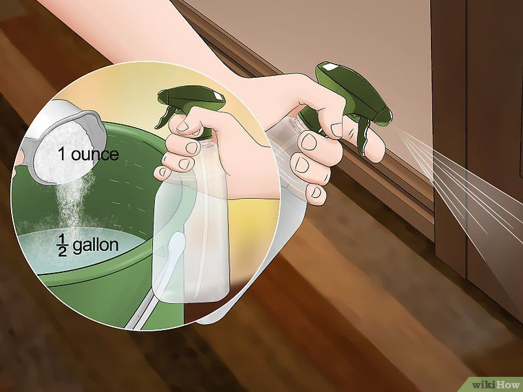 The Best Way to Make Spider Repellent at Home - wikiHow Handy Tips - cout plomberie maison neuve