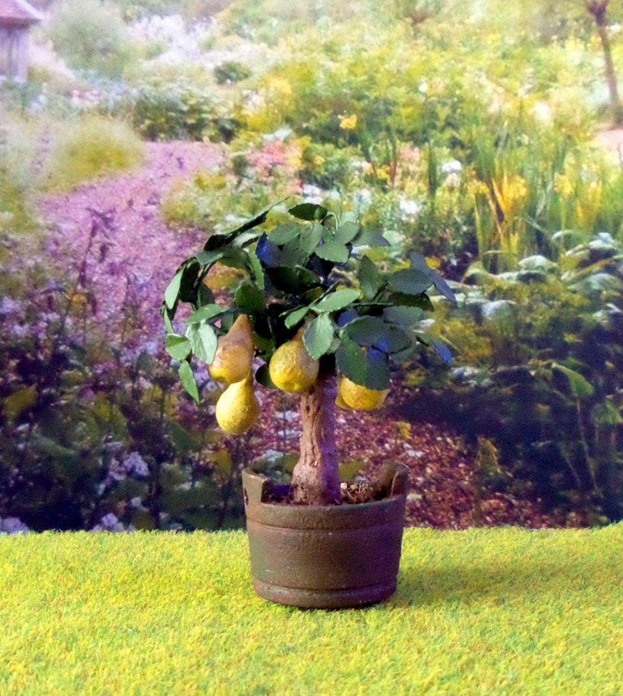 Plante verte arbre poirier dans bac en bois miniature maison de ...