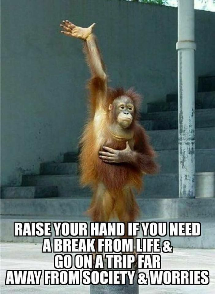 Positive Quotes For The Day Need A Break Me Docdarb Dariabrezinski Monkeys Funny Funny Monkey Pictures Funny Animals
