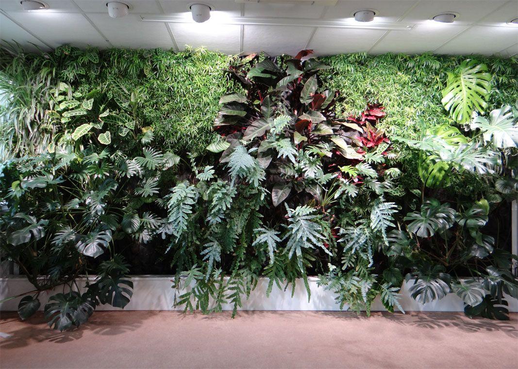 Créer Un Mur Végétal Extérieur