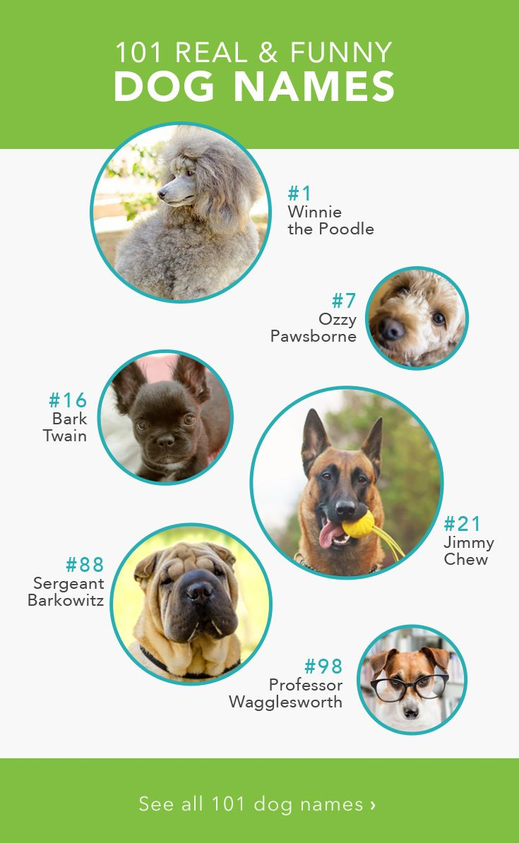 101 Funny Names For Dogs Funny Dog Names Funny Names For Dogs