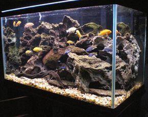 How To Set Up And Aquascape A Cichlid Habitat African Cichlid Aquarium Cichlid Aquarium African Cichlids
