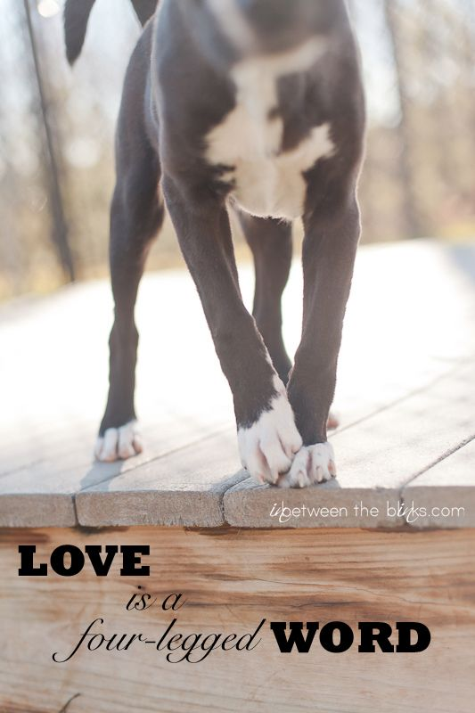 Dog Quotes Love Is A Four Legged Word Pets Photography Dog Love Pets Boxer Dog