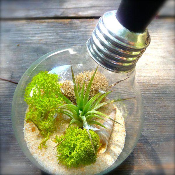 sand moos DIY Deko aus Glühbirnen Glühbirne Pinterest - pflanzgefase aus moos