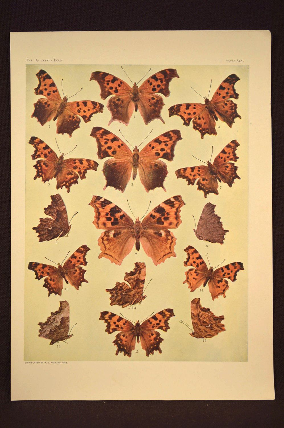 Print Butterflies Art Butterfly Print Wall Decor Antique | Butterfly ...
