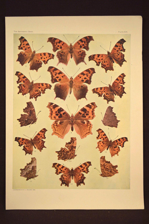 Print Butterflies Art Butterfly Print Wall Decor Antique ...