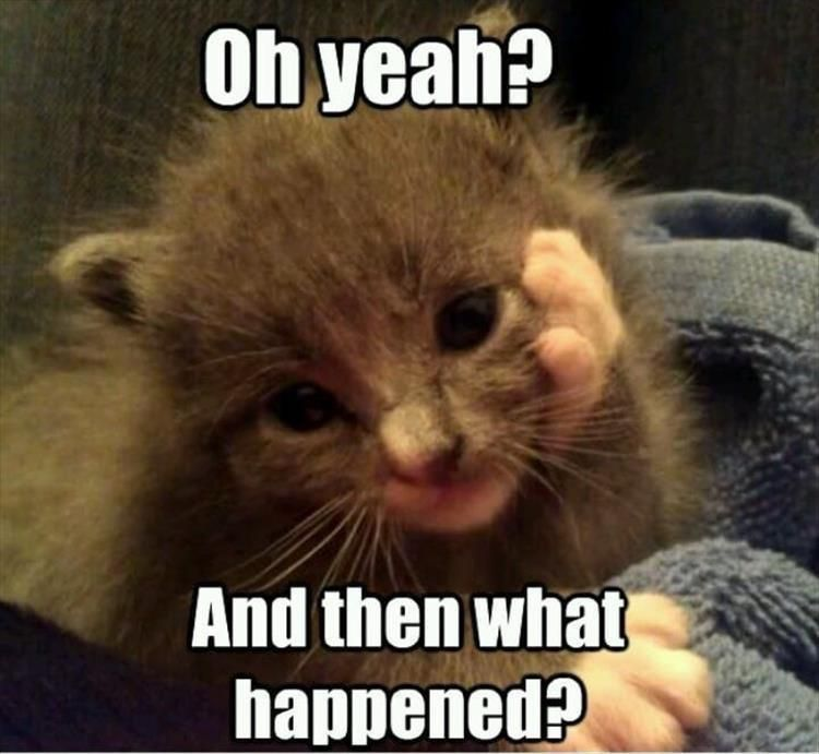Funny Animal Memes Of The Day That Are Extremely Hilarious 55 Pics Page 4 Of 5 Quit Boredom Baby Animals Funny Cute Funny Animals Funny Cat Memes