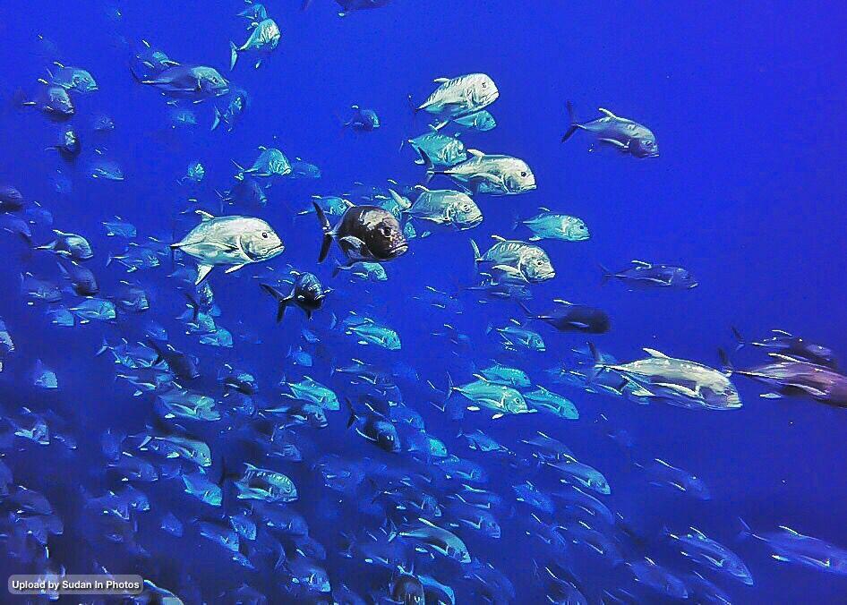 Beauty Of The Red Sea Depths In Port Sudan جمال أعماق البحر الأحمر في بورتسودان السودان Sudan Coralreef Portsudan Redsea Diving