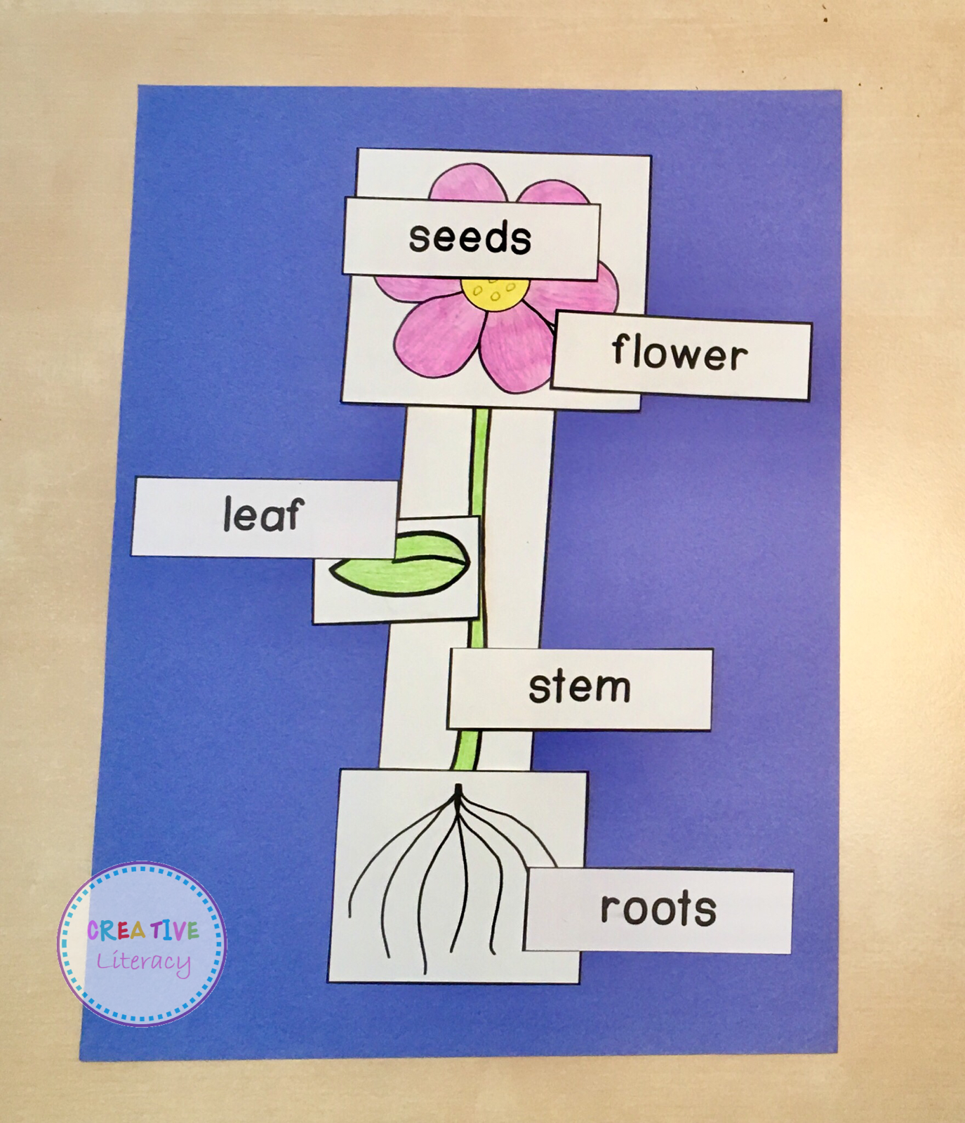 Plant Activities And Stations