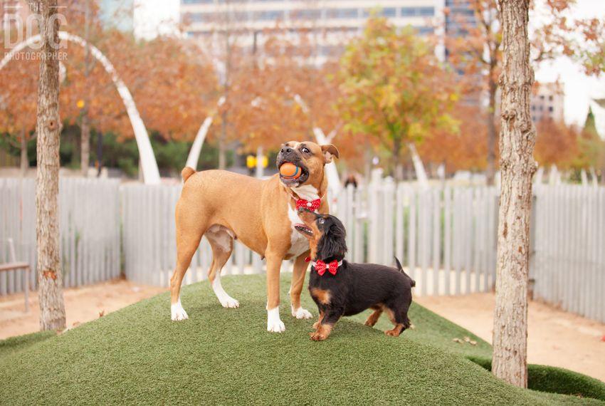 Pin by Looie on Dallas Urban dog, Dog runs, Dog photos