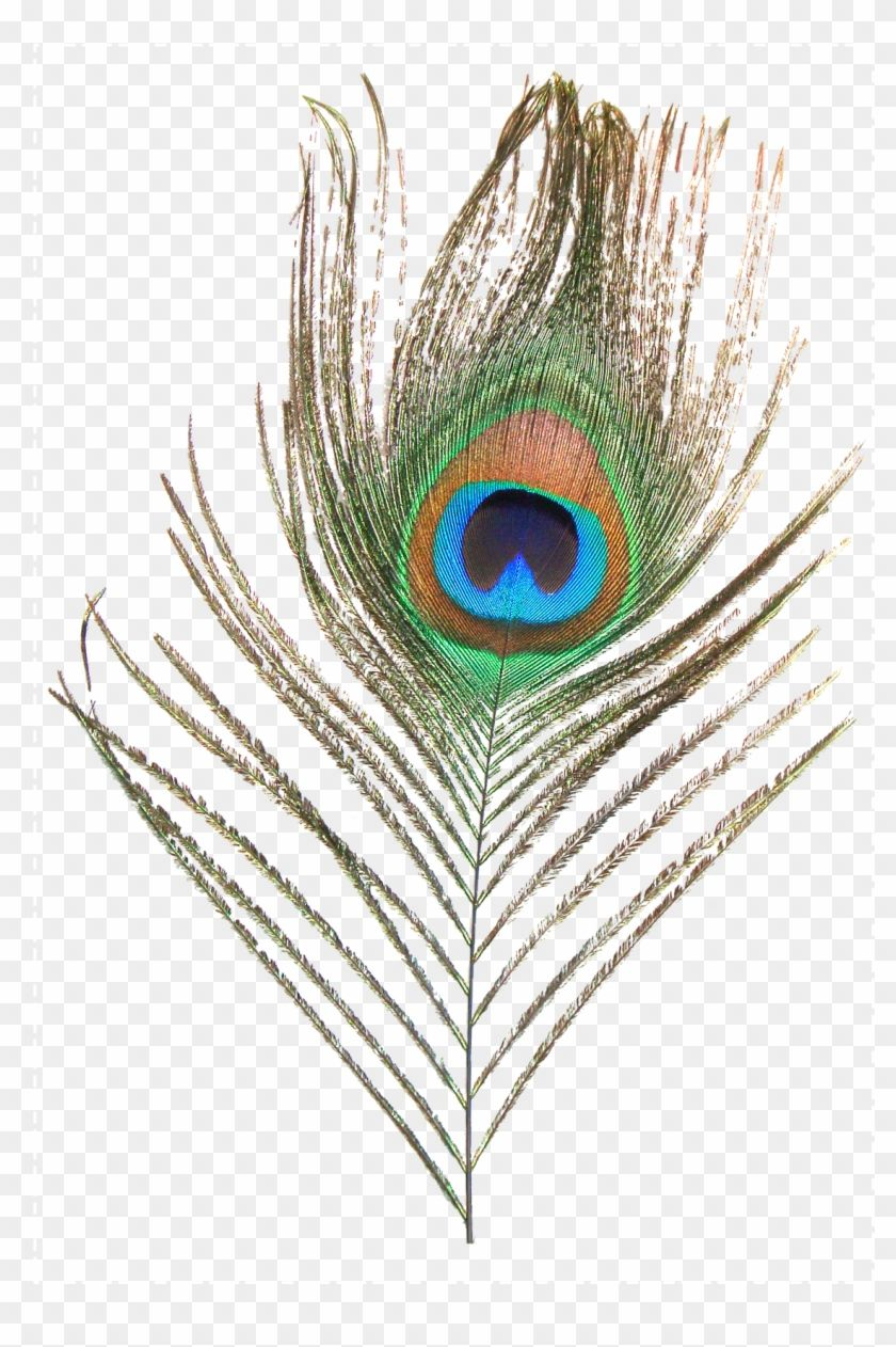 Pin By Aŋệệza Aŋsar On Png Peacock Feather Peacock Best Background Images