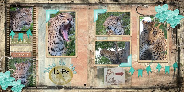 This-is-the-life---Leopard