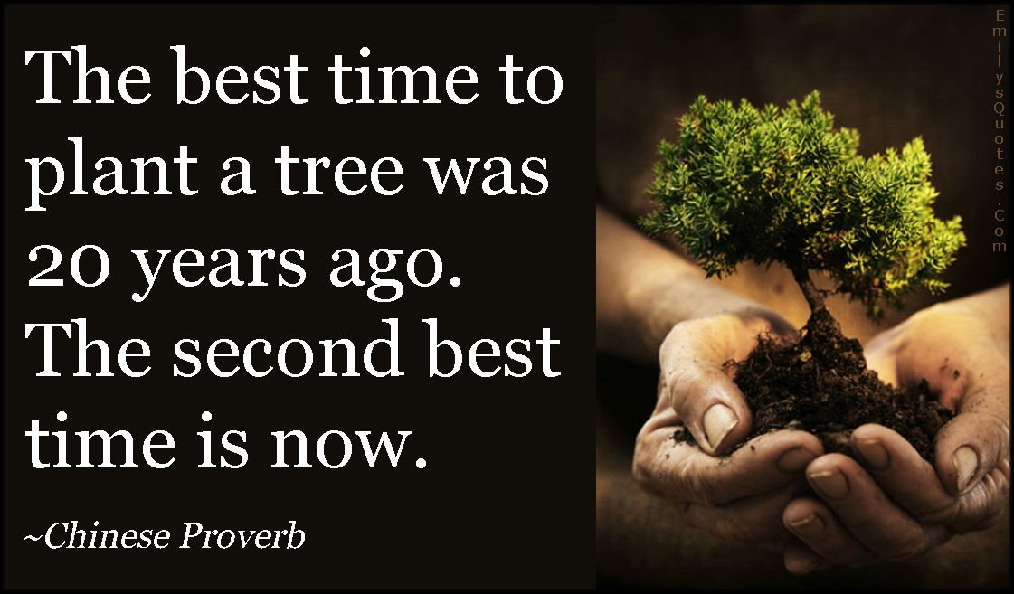 The Best Time To Plant A Tree Was 20 Years Ago The Second Best Time