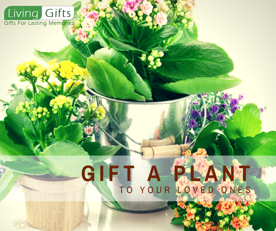Living Gifts Is The Largest Online Nursery Thus You Can Bonsai Plants And Get It Delivered To Your Doorstep