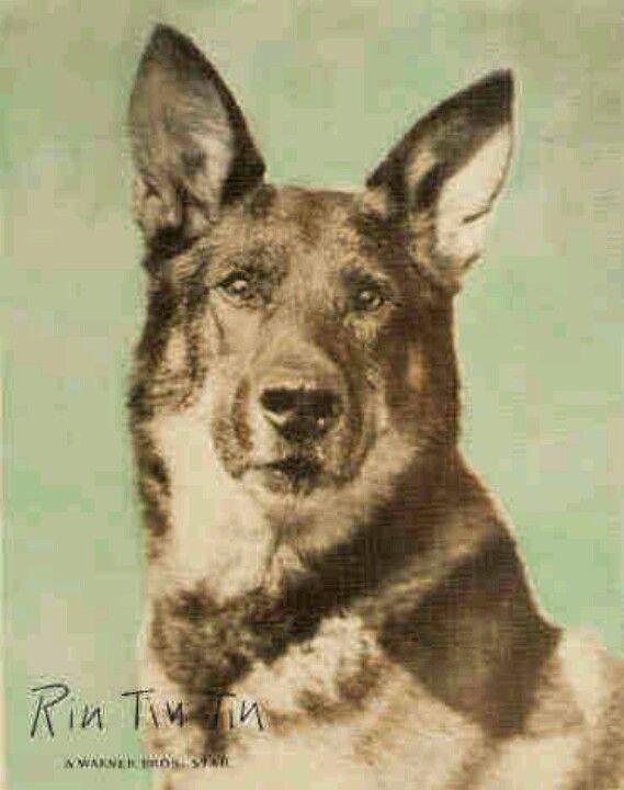 Rin Tin Tin Dogs Famous Dogs War Dogs