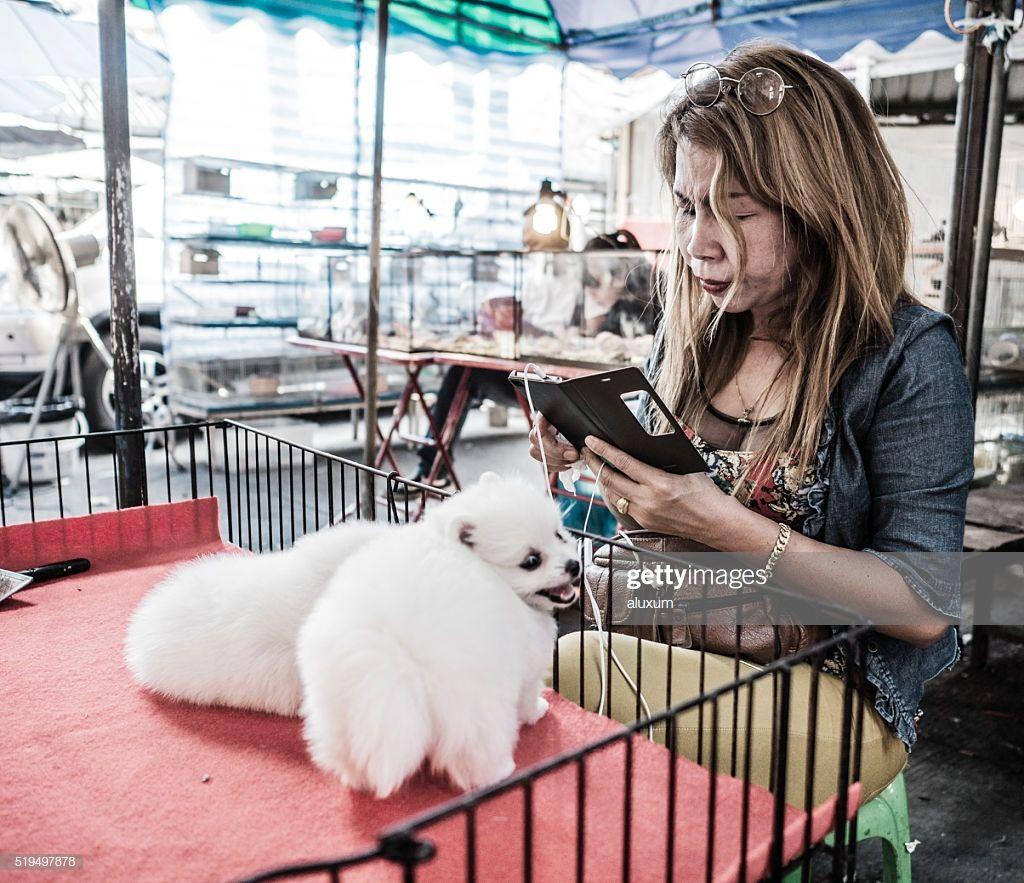 Kleinspitz Hunde Fur Den Verkauf Chatuchak Markt Bangkok