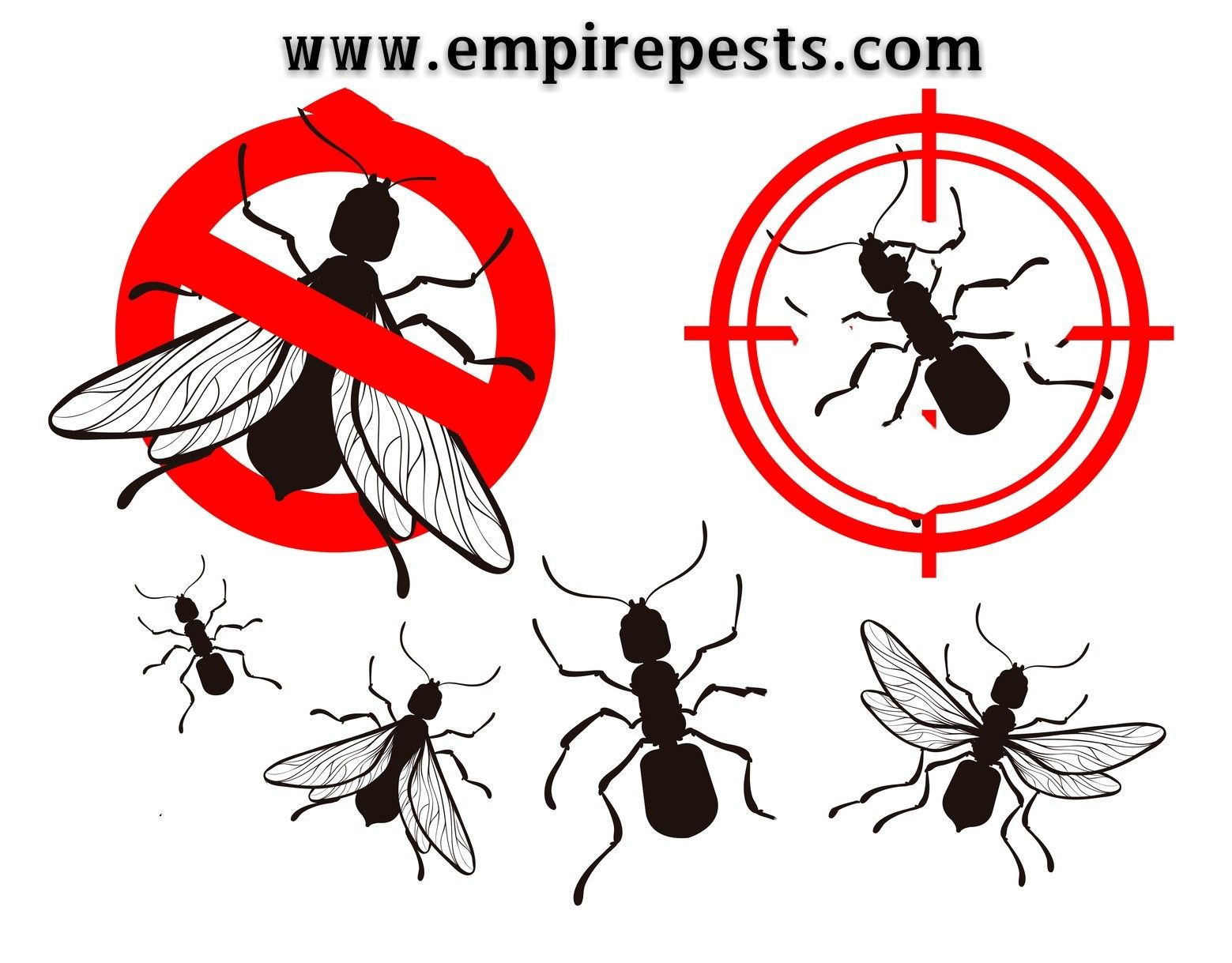 Looking for Emergency Pest Control in Toronto? Call Empire