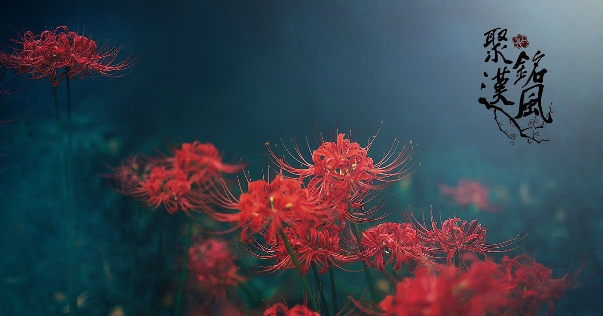 27 Anime Red Spider Lily Wallpaper Jan 6 2020 Tg Wallpaper The Spider Lily Resurrection Lily Lily Resurrection Spider Tg Tokyo Wallpaper They Are Often Call Di 2020