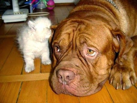 Secrets of Dogs and Cats Friendship The Pet's Planet