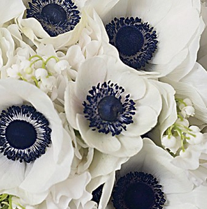Bold Blue Anemones Anemone White Anemone Anemone Wedding