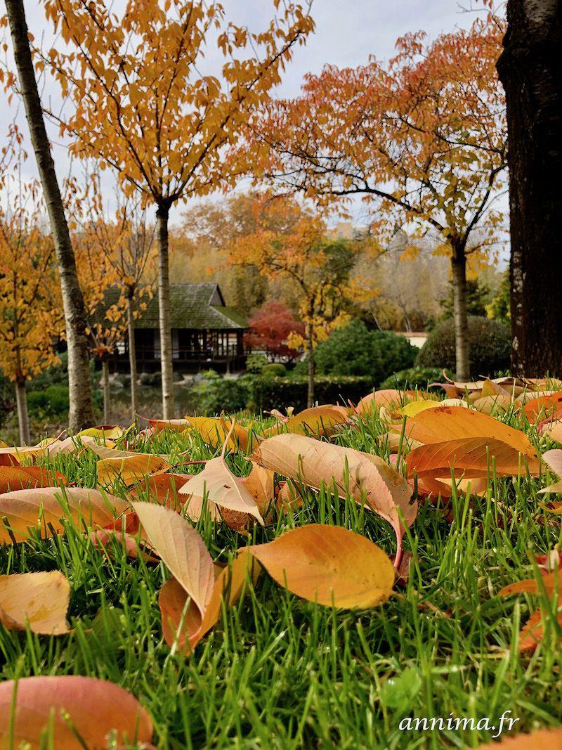 Le Jardin Japonais De Toulouse En Automne Annima Fr Jardins