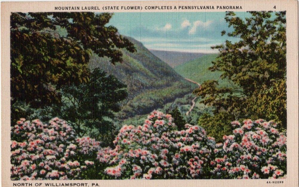 Vintage Pennsylvania Postcard Mountain Laurel The State Etsy Mountain Laurel Poconos Pa Poconos