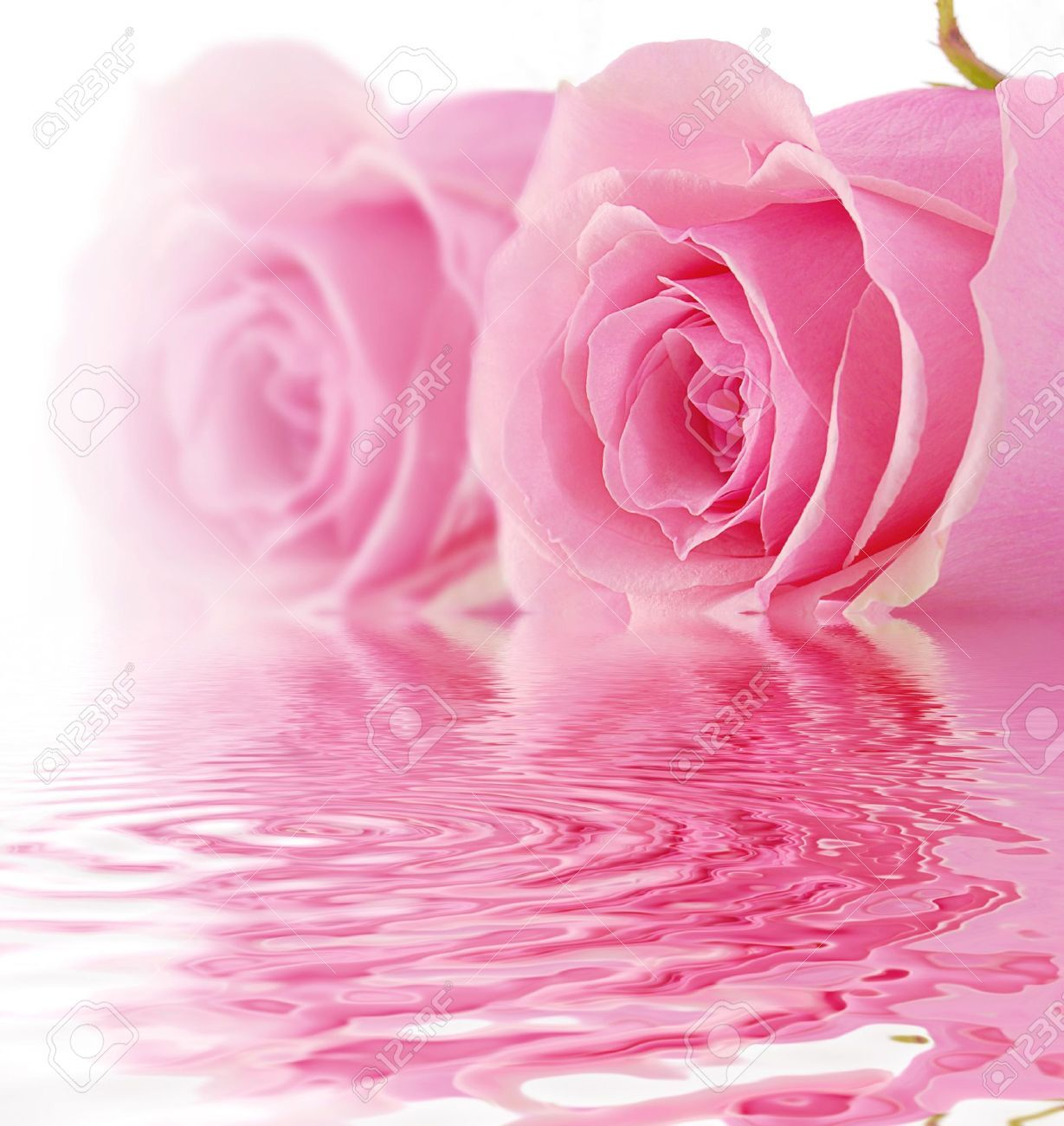 pink rose background 35 wallpapers � art wallpapers