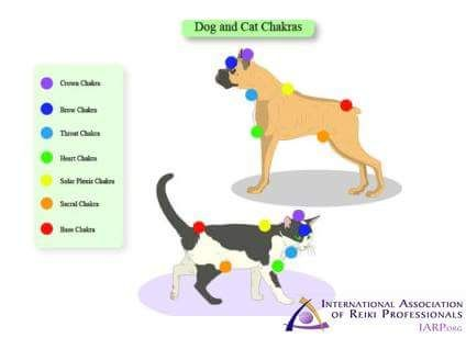 Loved this image showing the chakras of cats and dogs.  I have a cat who loves Reiki, and this is very helpful information.