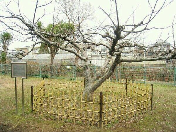 هذه شجرة التفاح التي جلس تحتها نيوتن فسقط التفاحة عليه وجعلته يخرج لنا قانون الجاذبية Garden Arch Outdoor Structures Outdoor