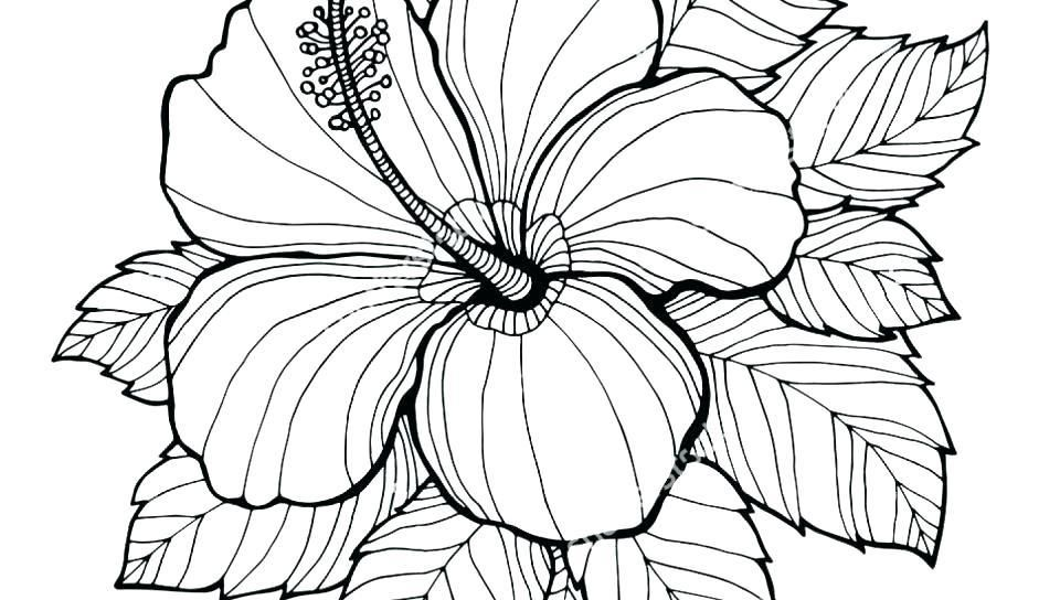 Coloring Page Of A Flower Flower Design Coloring Pages Flower Printable Flower Coloring Pages Flower Coloring Sheets Flower Coloring Pages