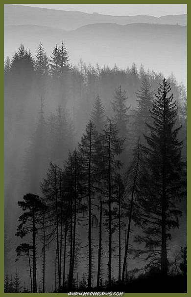 Photo of Excellent 25+ ideas tattoo wolf tree forest