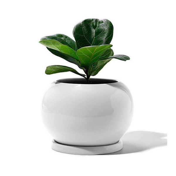Large White Ceramic Plant Pot With Drainage And Saucer In 2020 Planting Flowers Ceramic Plant Pots Flower Pots
