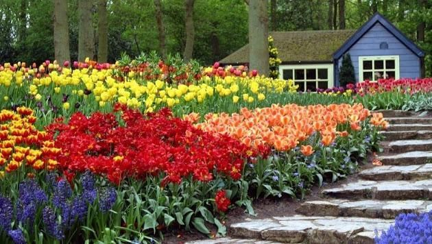 Vee On Twitter Beautiful Gardens Beautiful Flowers Garden Garden Design Flower garden background hd images