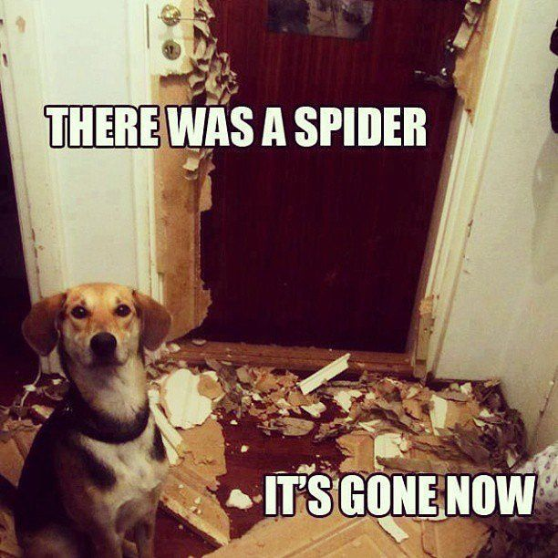 Dogs Cats And Other Pets Need A Laugh These Animal Memes Should Do The Trick Popsugar Pets Photo 9 Silly Animals Funny Animal Jokes Funny Animal Memes