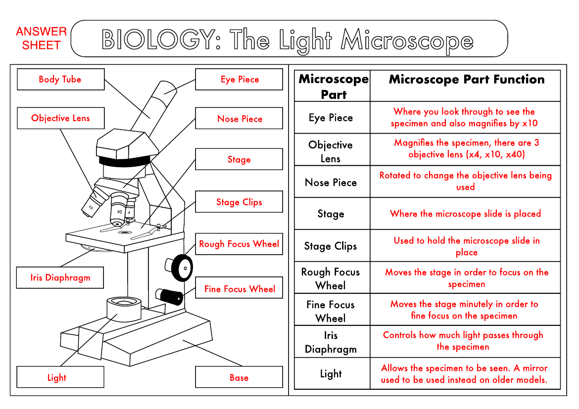 Biology Worksheet The Microscope